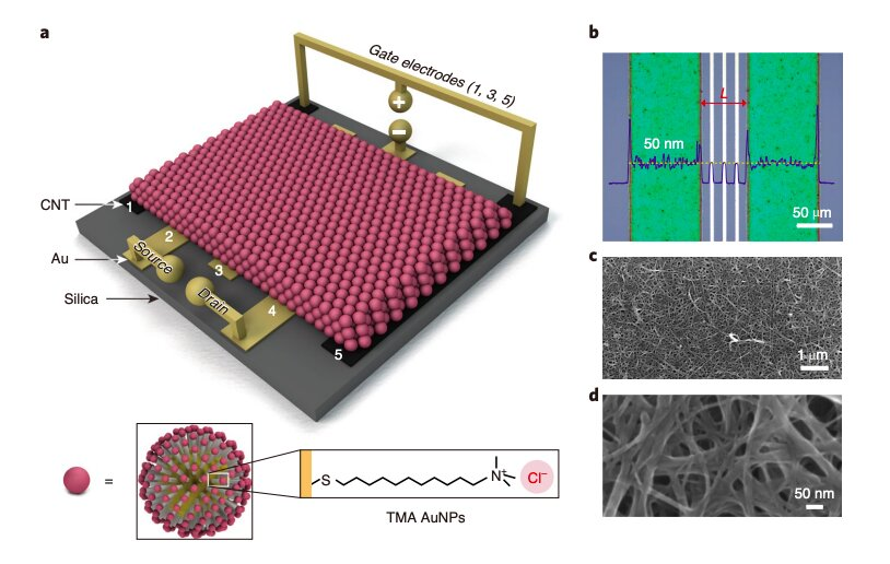 Researchers create a new transistor based on metal nanoparticles and ionic gradients