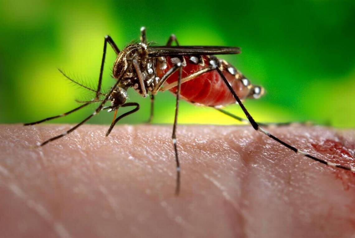 photo of Scientists use machine-learning approach to track disease-carrying mosquitoes image