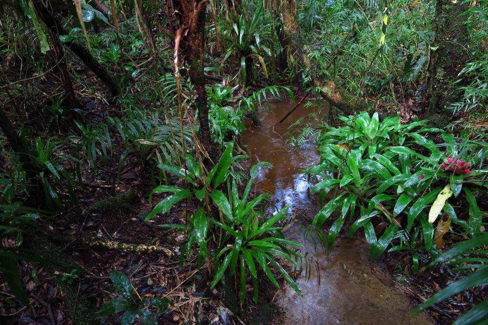 behavior in treefrogs