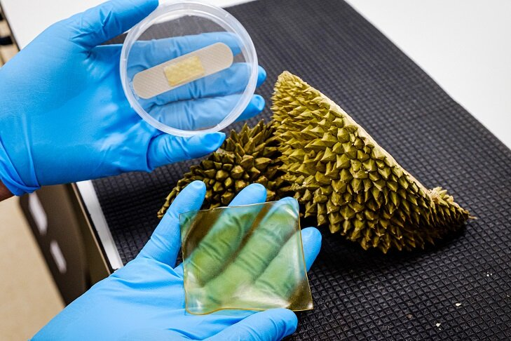 Scientists develop antibacterial gel bandage using durian husk