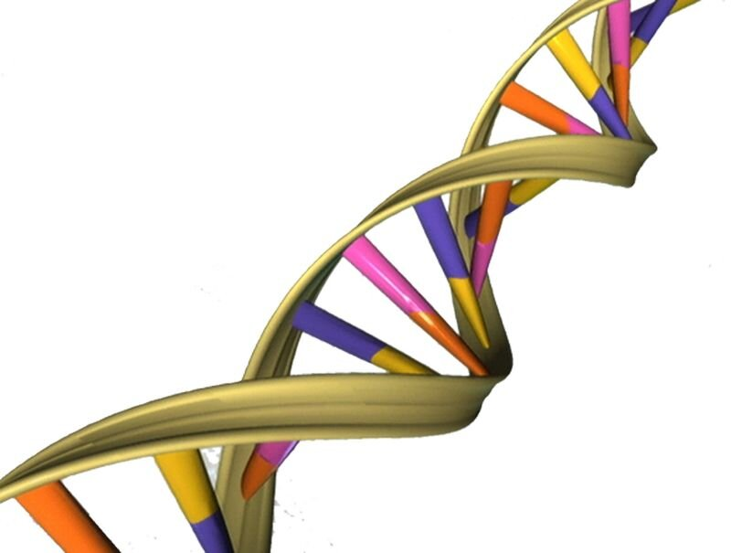 Understanding how DNA repairs itself may lead to better cancer treatment