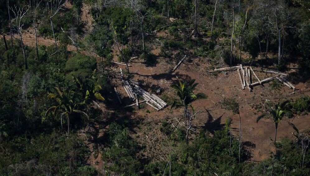 Pandemic covers up setbacks in Brazilian environmental laws