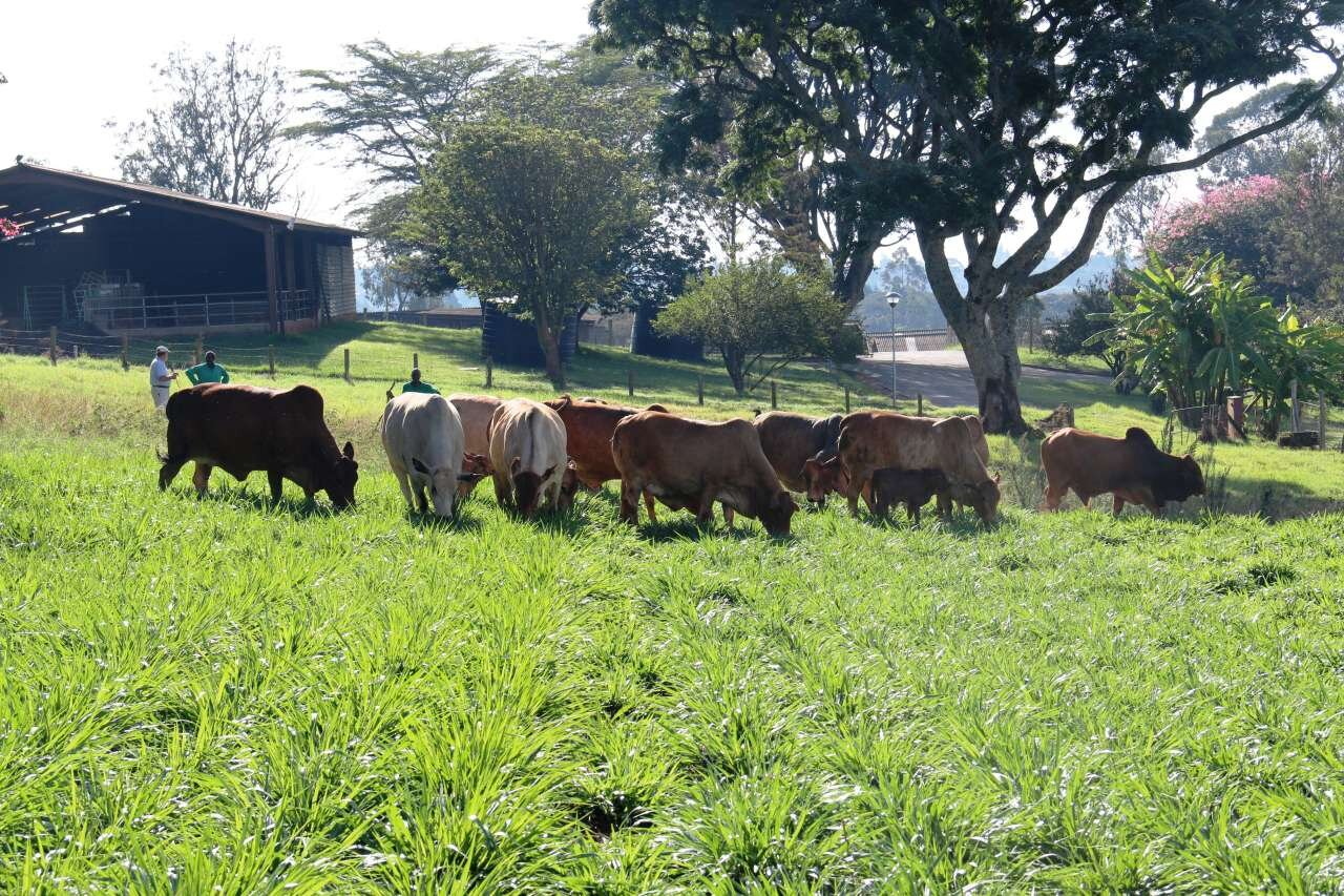 photo of A climate-smart success story for African agriculture image