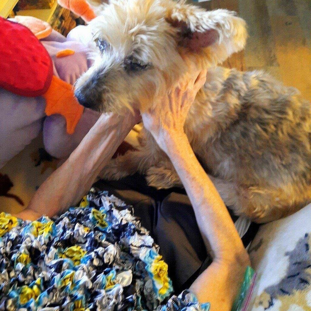 photo of A more comfortable goodbye? Vets bring pet euthanasia home image
