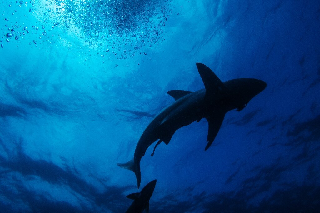 photo of High cost to wildlife from shark nets protecting S.Africa beaches image