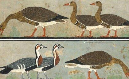 Ancient art reveals extinct goose - Phys.org