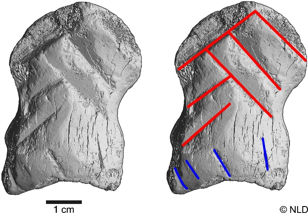 Ancient bone carving could change the way we think about Neanderthals