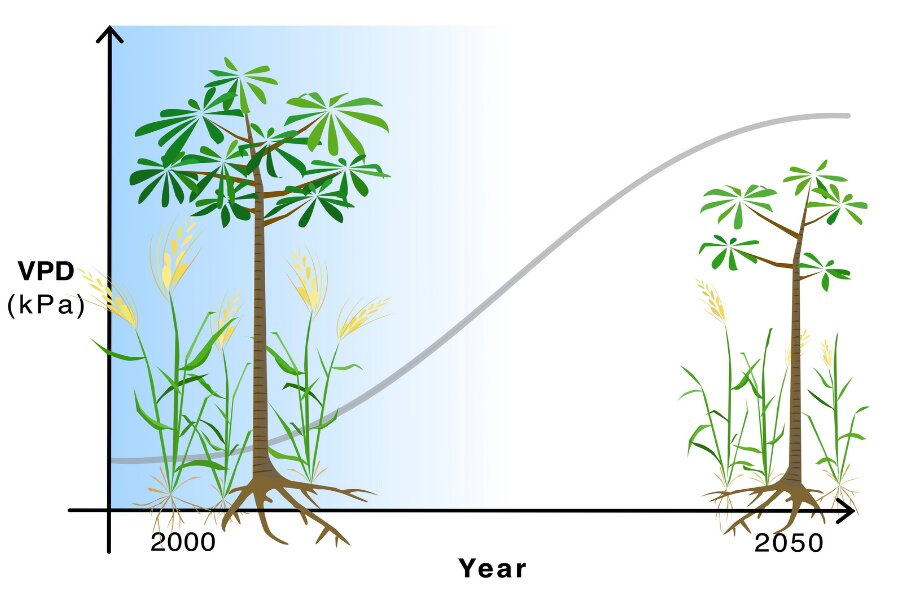 Atmospheric drying will lead to lower crop yields, shorter trees across the globe