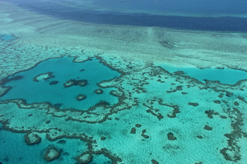 Barrier Reef outlook poor despite coral 'recovery': scientists