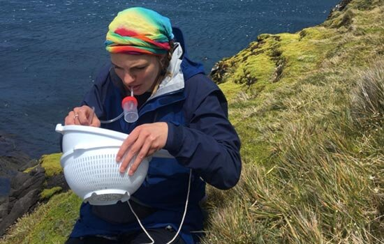Beetle study finds diversity in the sub-Antarctic linked to global cooling