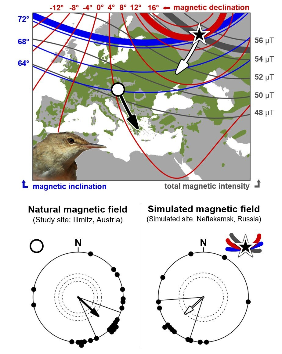 Birds can 'read' the Earth's magnetic signature