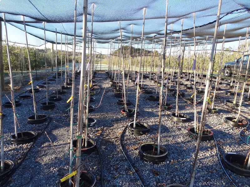 Compost improves apple orchard sustainability