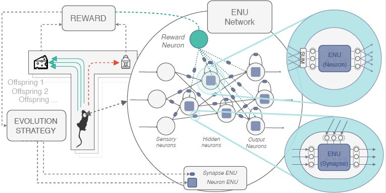 Evolvable neural units that can mimic the brain's synaptic plasticity