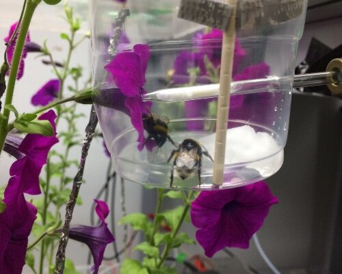 photo of Flowers release their perfume in response to electricity of a bee's touch image