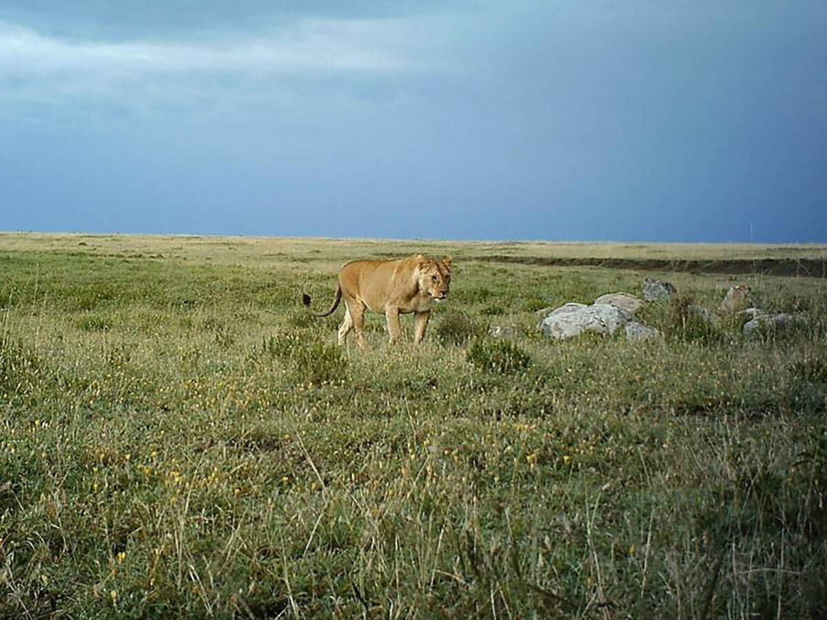 photo of Hakuna my data: New tools to increase reliability of citizen science image