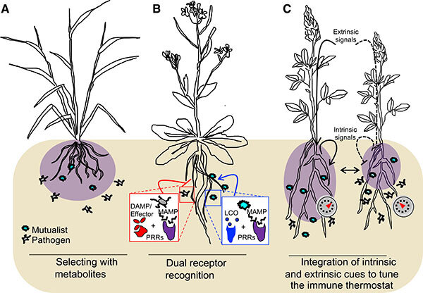 photo of How do plants balance microbial friends and foes? image