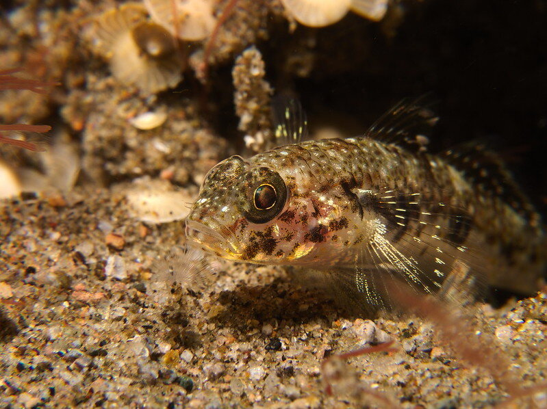 photo of Study: Fish camouflage better without friends nearby image