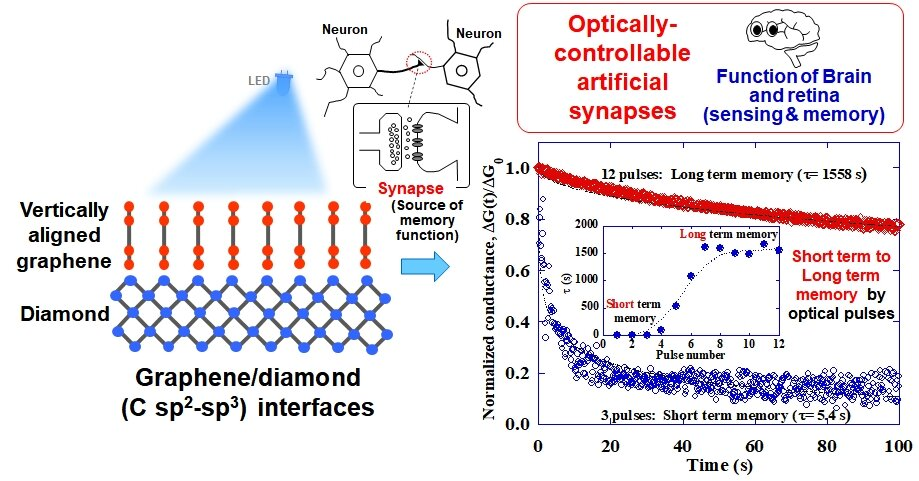 Mimicking brain functions with graphene-diamond junctions