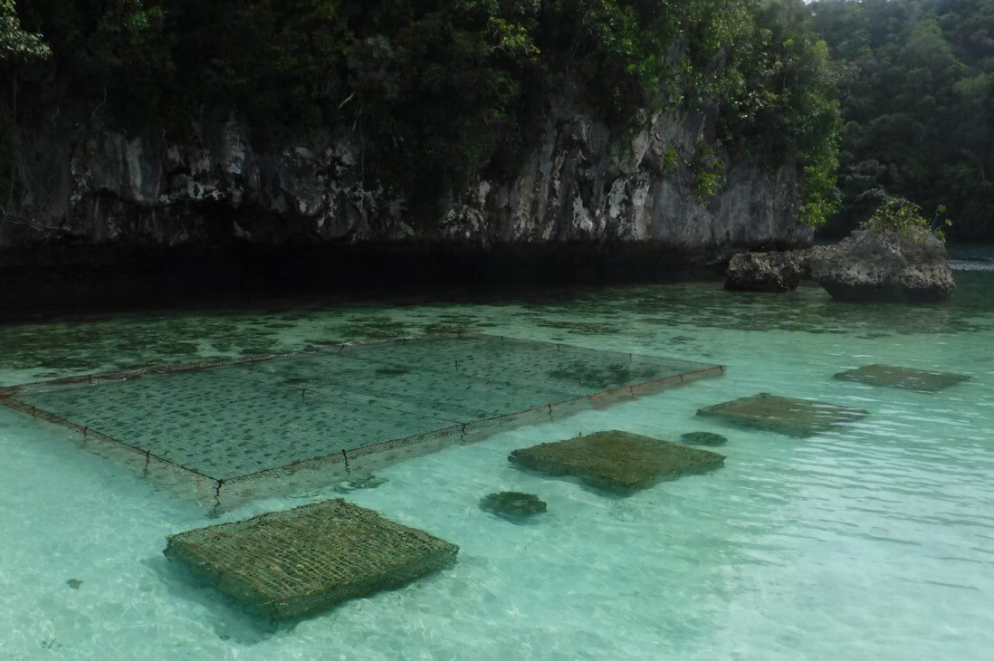 NASA satellites help plan future for Palau fish stocks