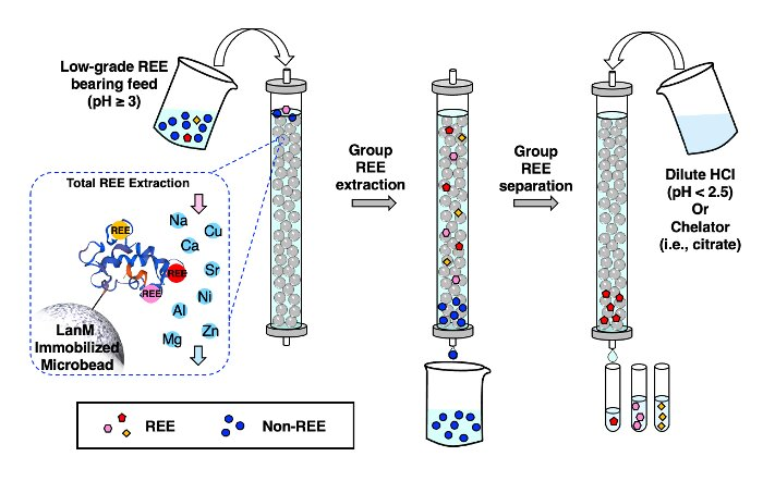 New, environmentally friendly method to extract and separate rare earth elements