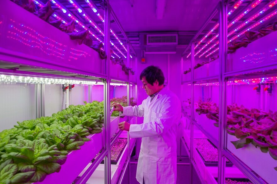 New vertical farms will tackle global food challenges, and are set to be used by retailers, caterers and schools