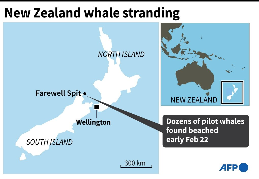 photo of Stranded whales refloated in New Zealand but concerns remain image