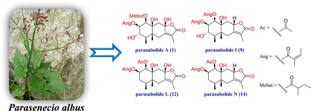 Novel eremophilane sesquiterpenoids with immunosuppressive activity isolated from Parasenecio albus