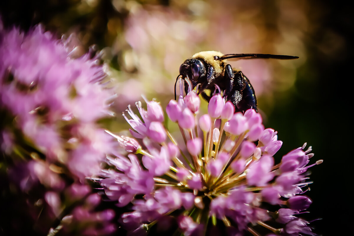 photo of Pollinators not getting the 'buzz' they need in news coverage image