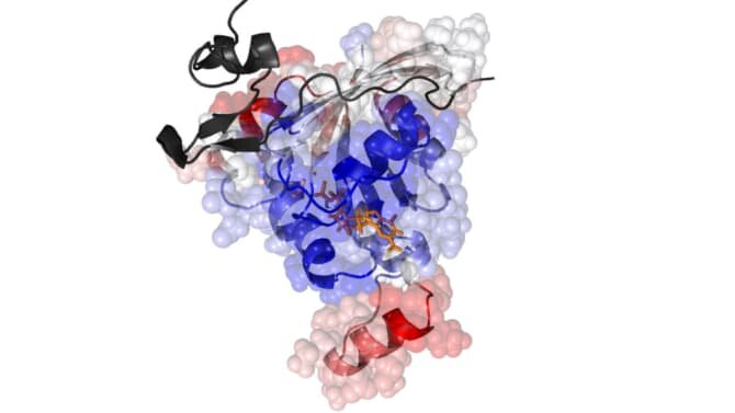 Protein dynamics research breakthrough could result in new cancer treatments