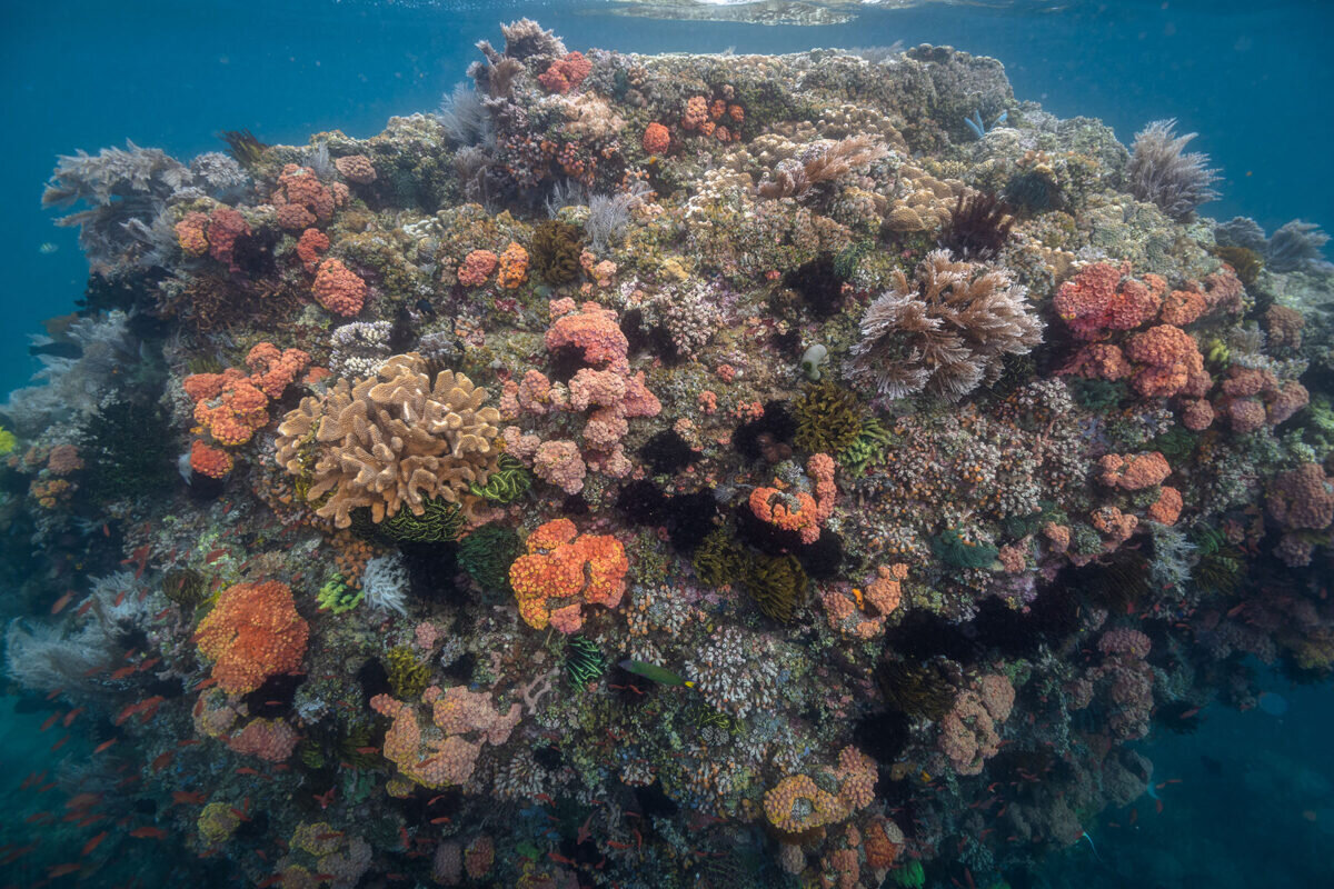 photo of Region of 'super corals' discovered image