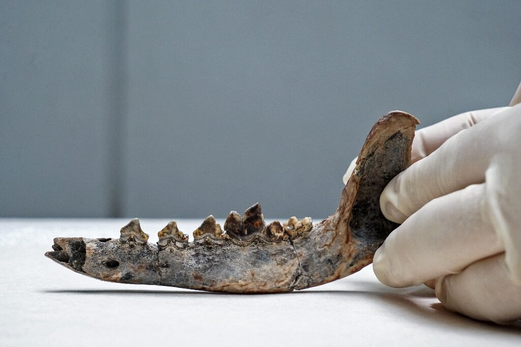Researchers say fossil shows humans, dogs lived in C. America in 10,000 BC