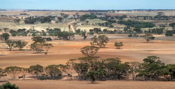 photo of Researchers calculate the cost of restoring Australia's degraded ecosystems image