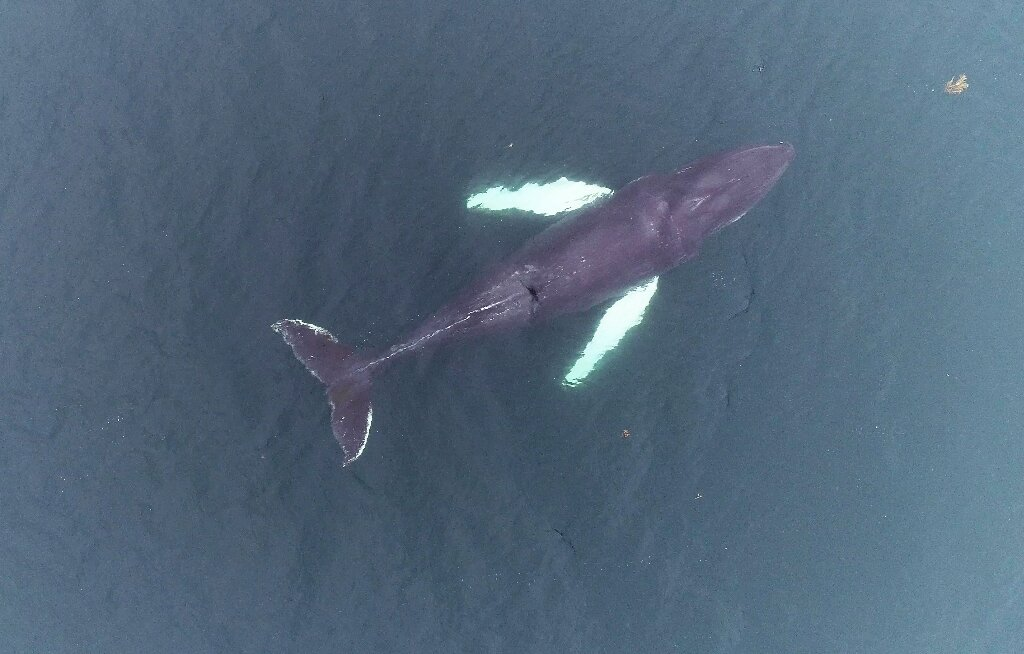 Do tourist boats stress out whales? Researchers find out