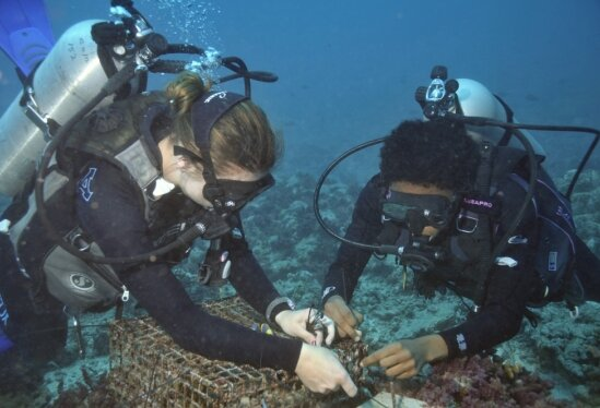 The long view: Studying kelp forests and coral reefs to understand and predict the effects of climate change