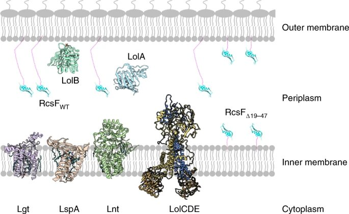 The soft 'spaghetti' of proteins that's essential for the resistance of bacteria