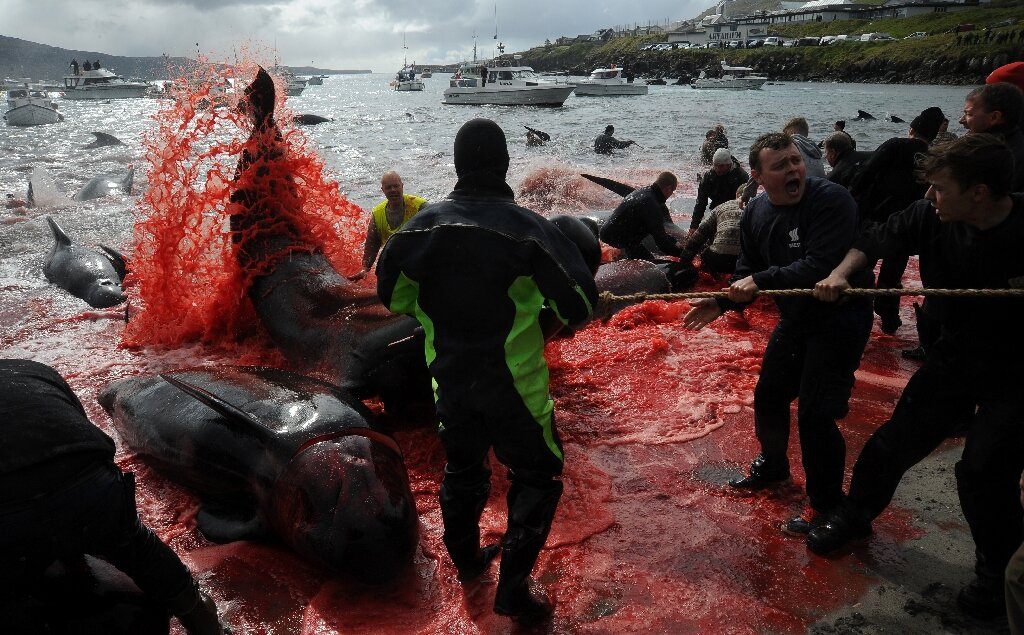 photo of Outcry as Faroe Islands slaughter 1,400 dolphins in a day image