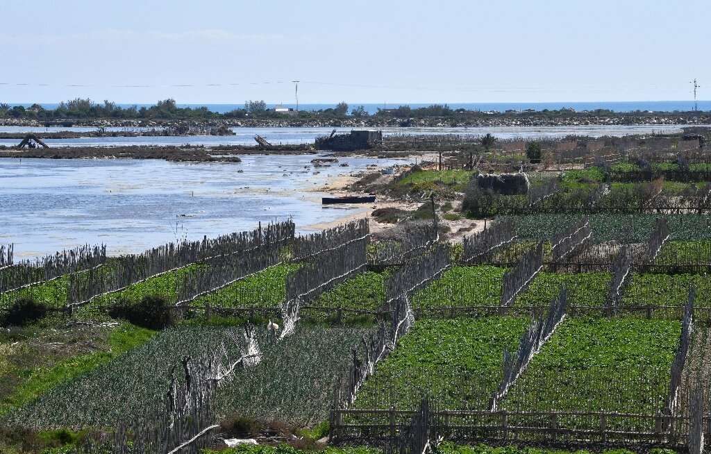 Tunisia 'sandy' farms resist drought, development