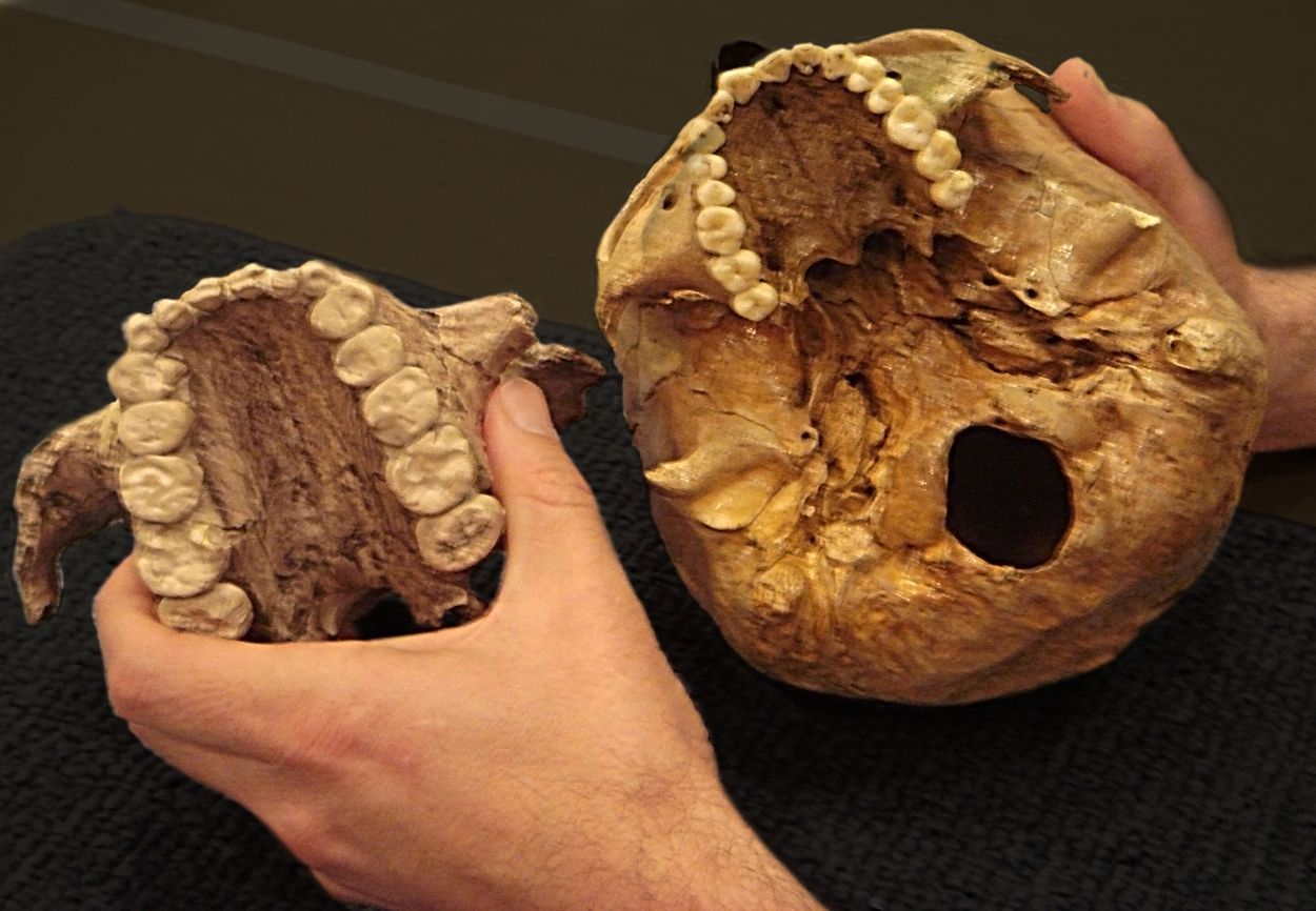 Image result for prehistoric man palate