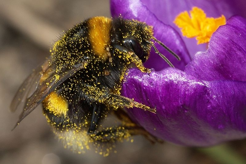 Understanding the flight of the bumblebee