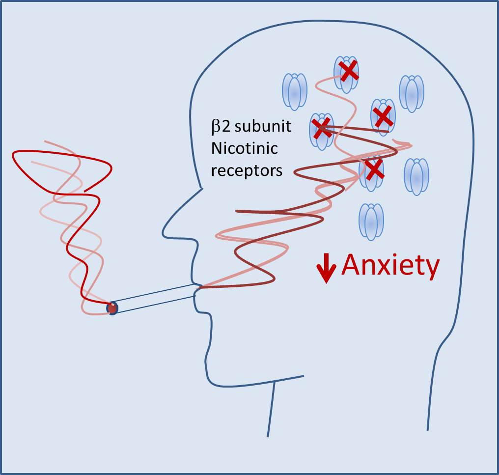Cigarettes anxiety disorder can you advertise cigarettes on facebook