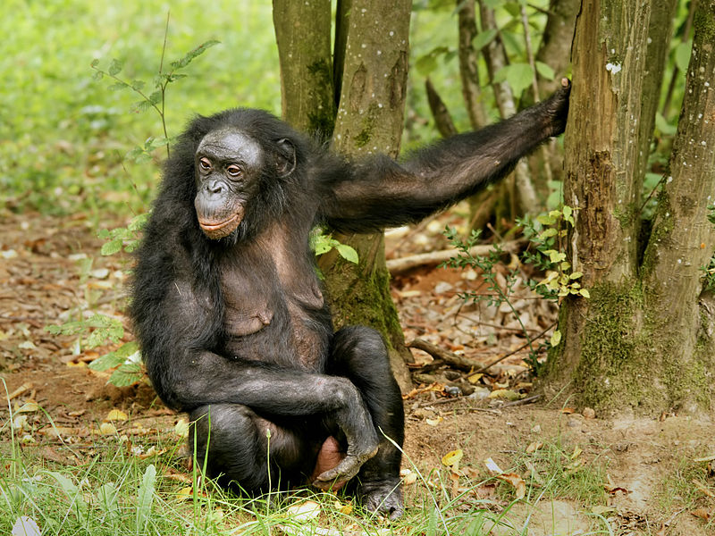 penisuri la primate