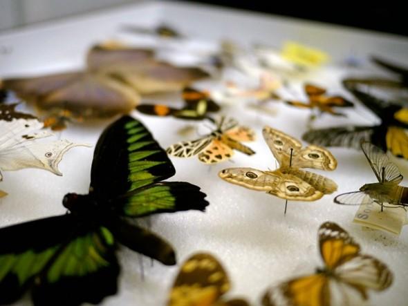 2-entomologist.jpg
