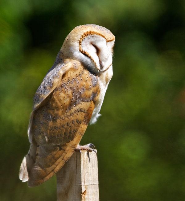 Baby Owls Sleep Like Baby Humans