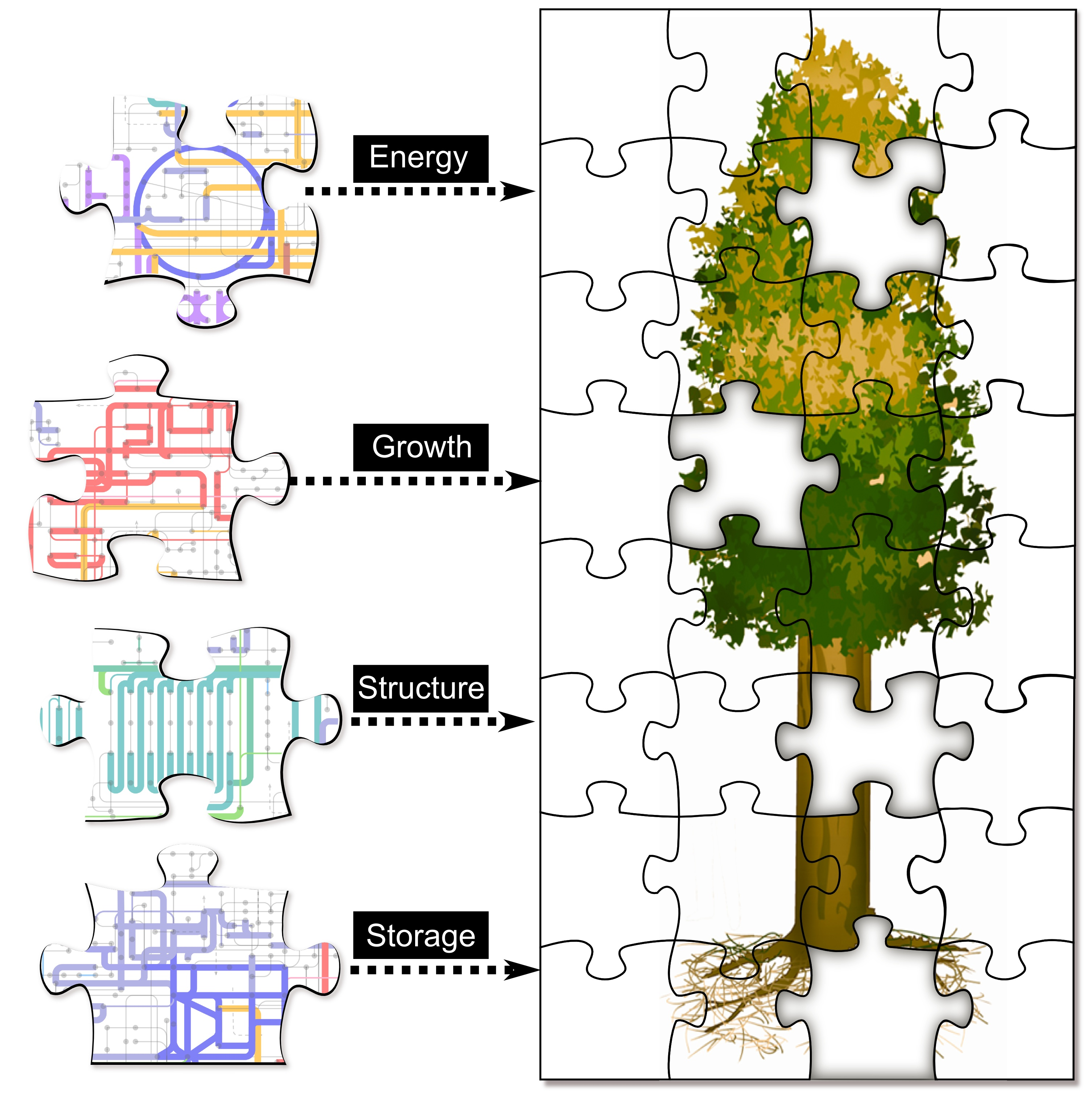 Zoomable' map of poplar proteins offers new view of bioenergy crop