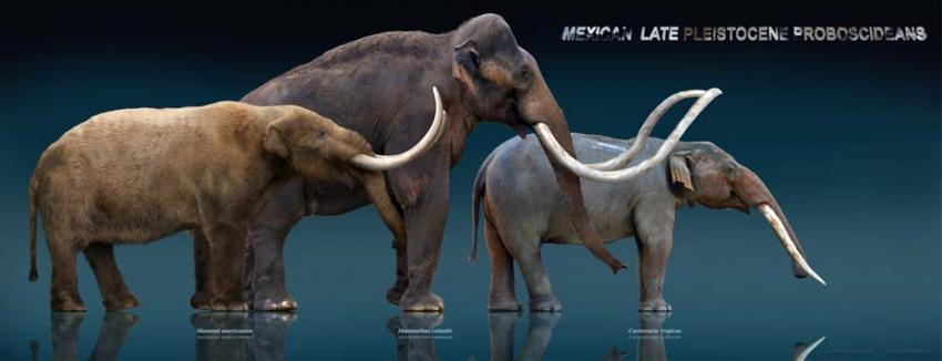 Meet The Gomphothere Archaeologists Discover Bones Of Elephant