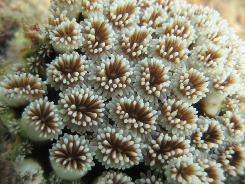 Coral reefs are better at coping with rising sea