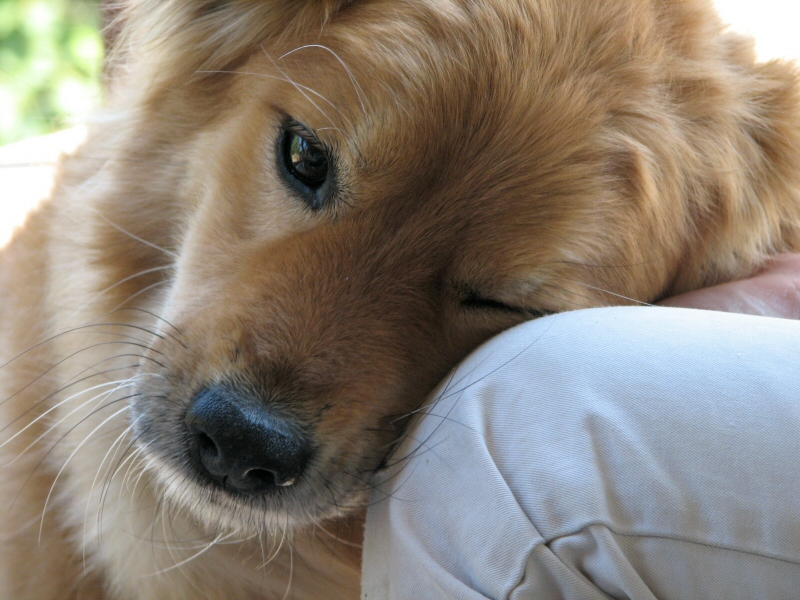 Dog Ownership Benefits Families Of Children With Autism Researcher Finds