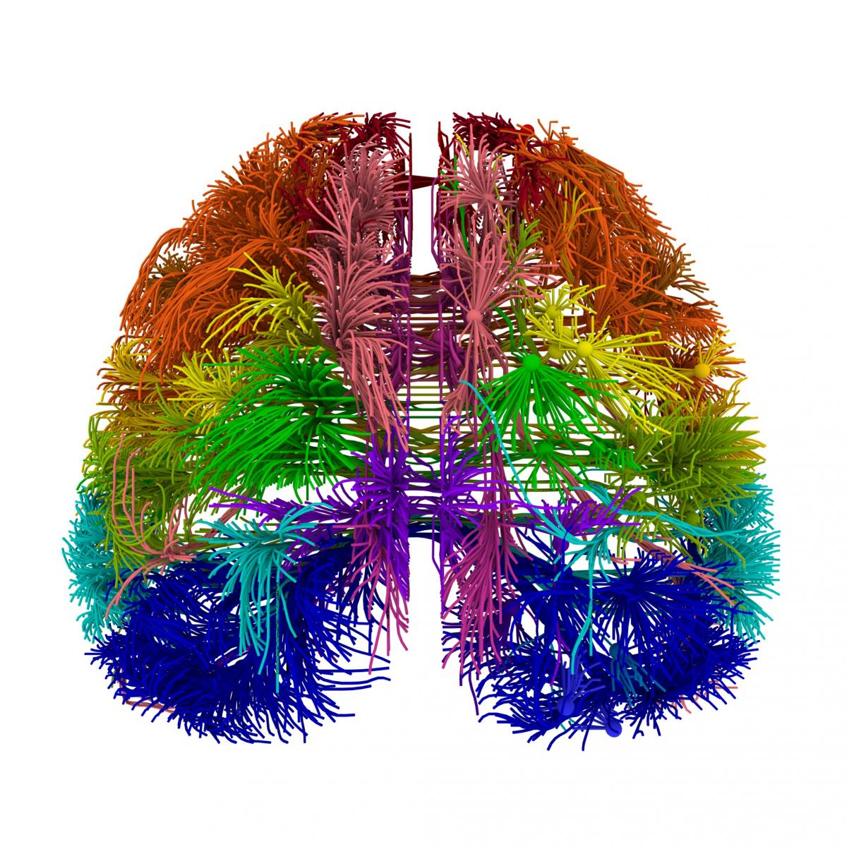 Research showcases most comprehensive wiring diagram of mammalian brain to  dateMedical Xpress