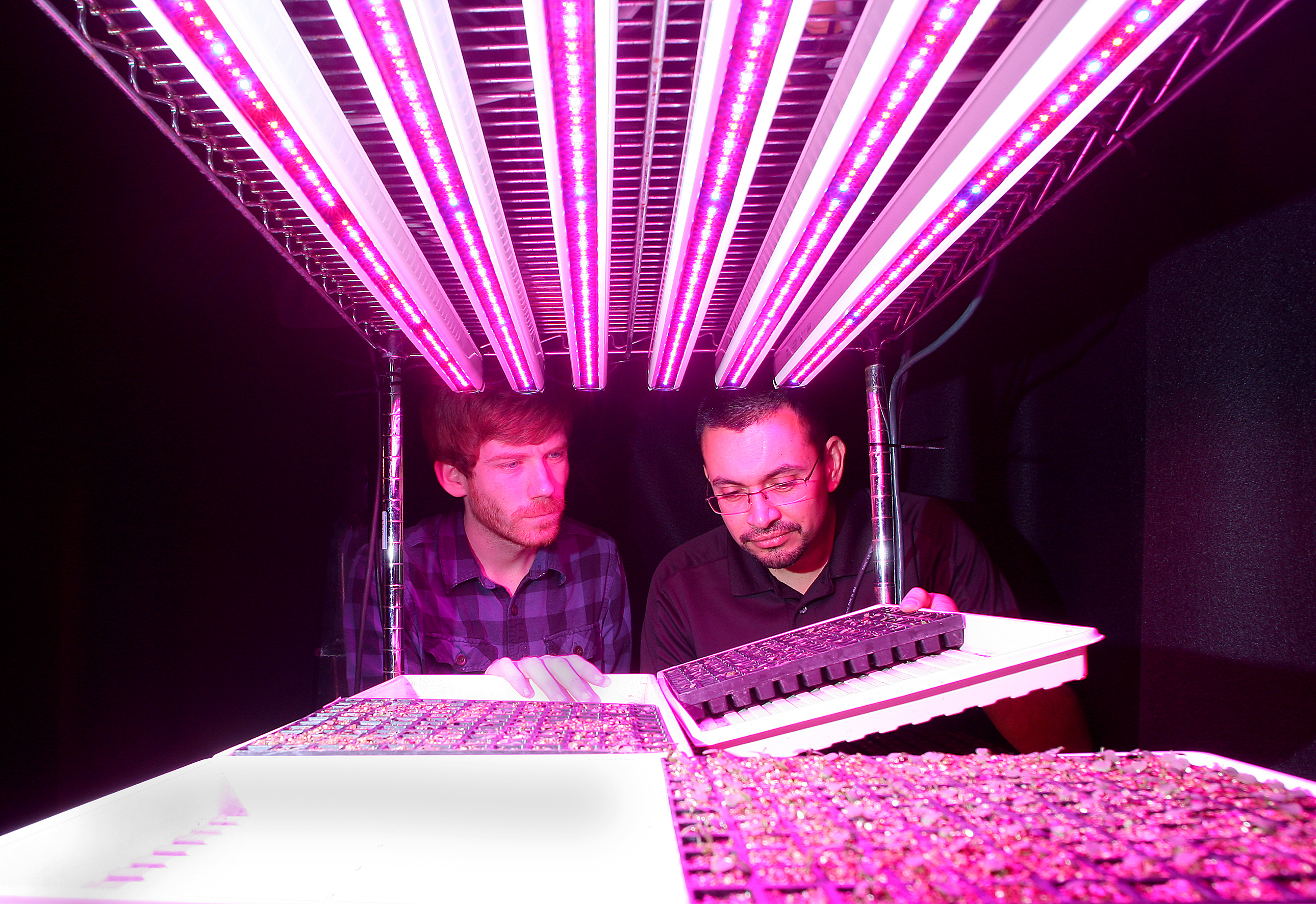 Ornamental Plant Seedlings Grown With Led Lights At Purdue