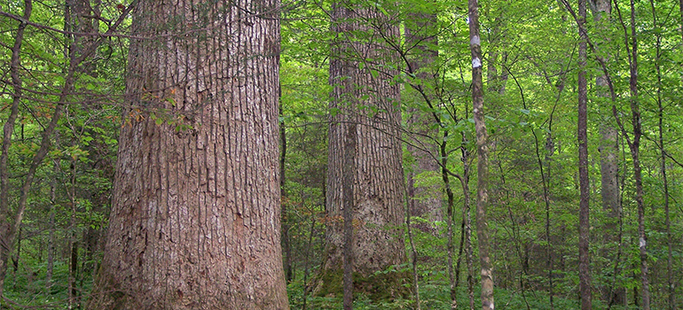 Trees may work together to form resource-sharing networks with root grafts